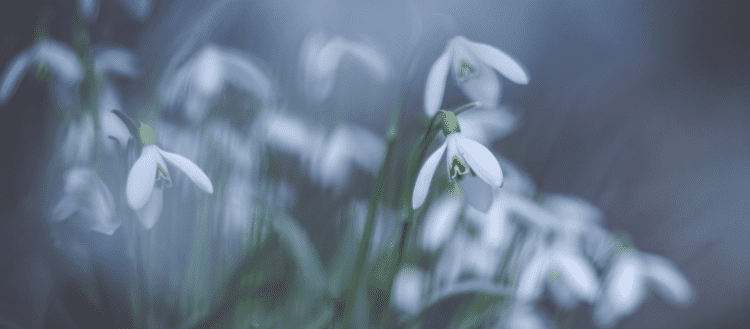 The Modern Witch's Guide to Imbolc - online course