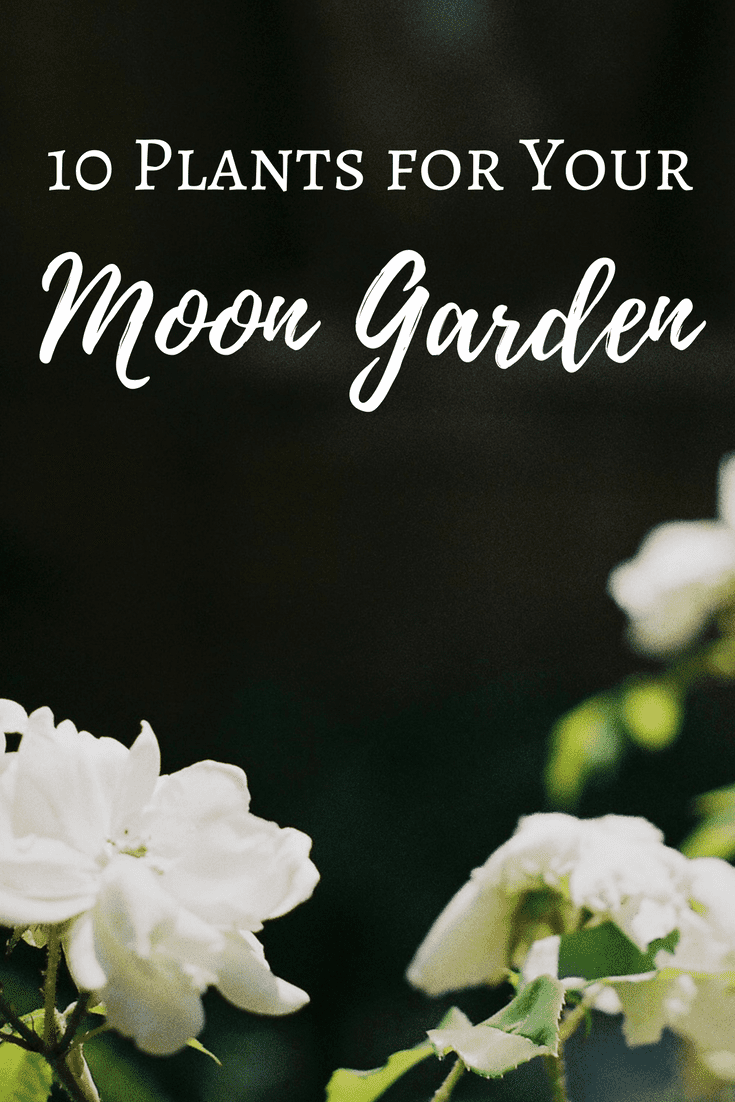 10 Plants For Your Moon Garden | The Witch Of Lupine Hollow